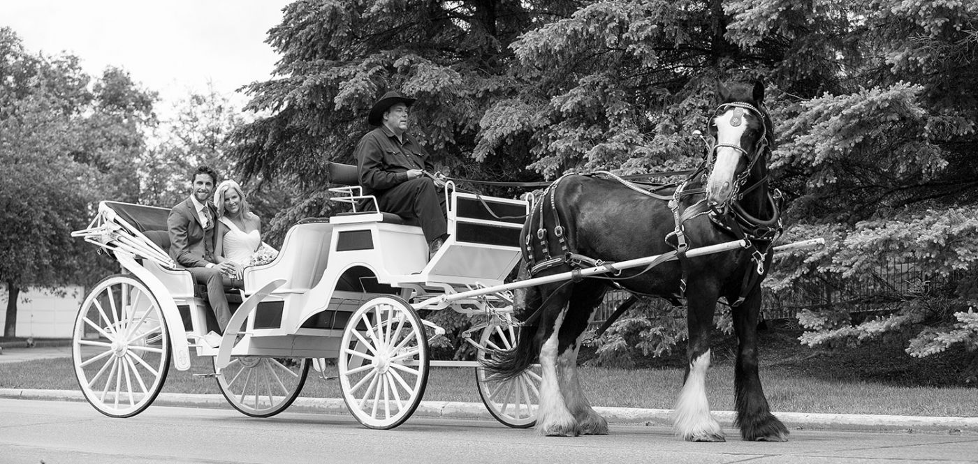 A white horse drawn carriage on the wedding day